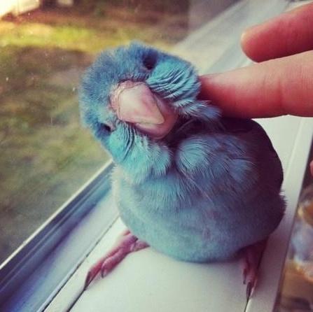Twitter, o rețea greu de înțeles?