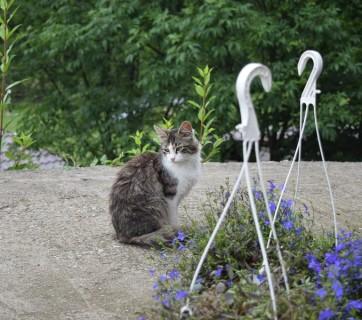 Pisici si aer proaspat