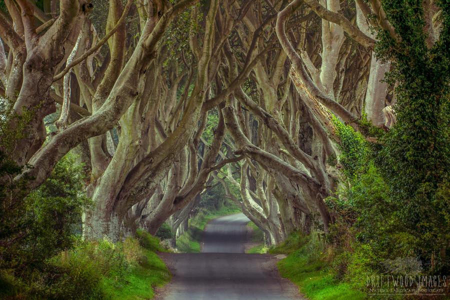 Drumul Regelui