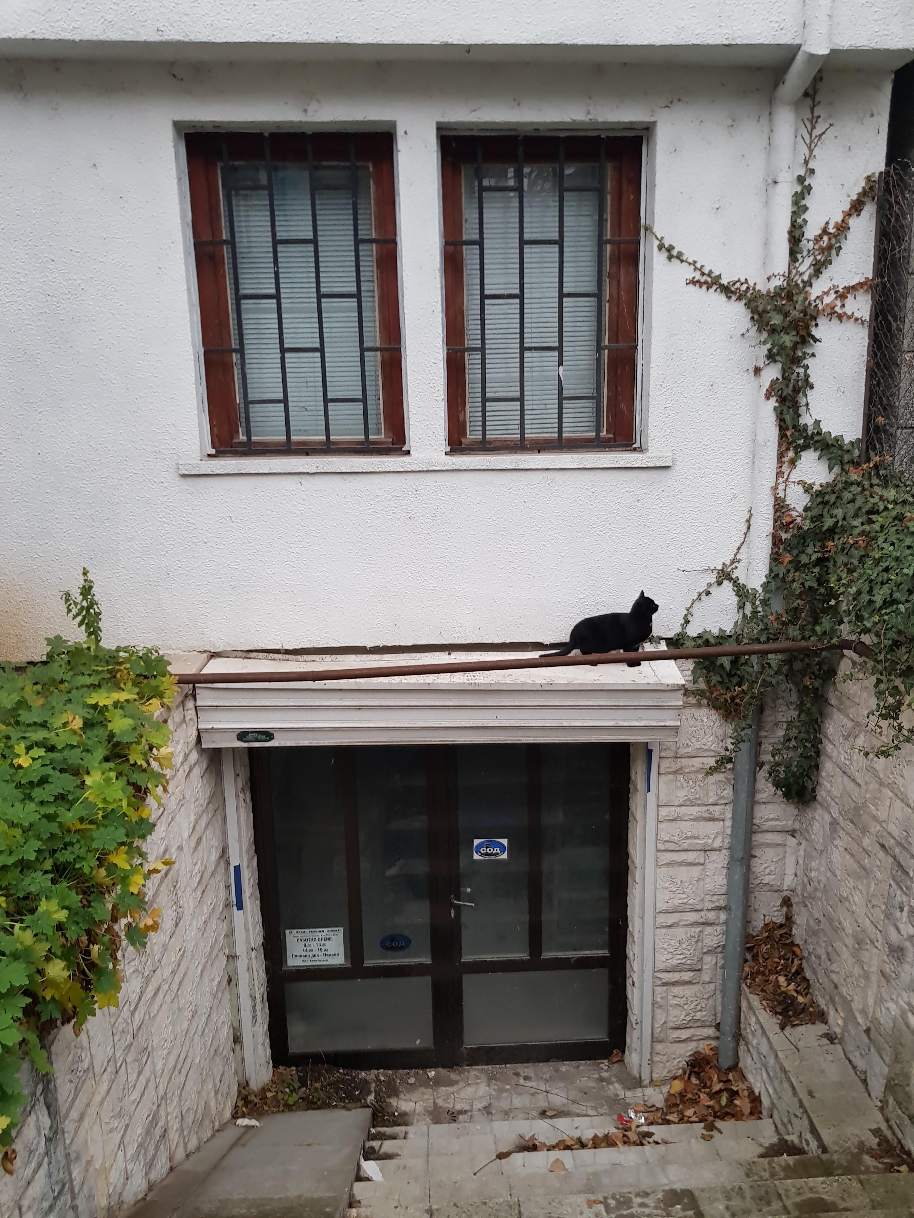 Pisicile apar mereu in peisaj
