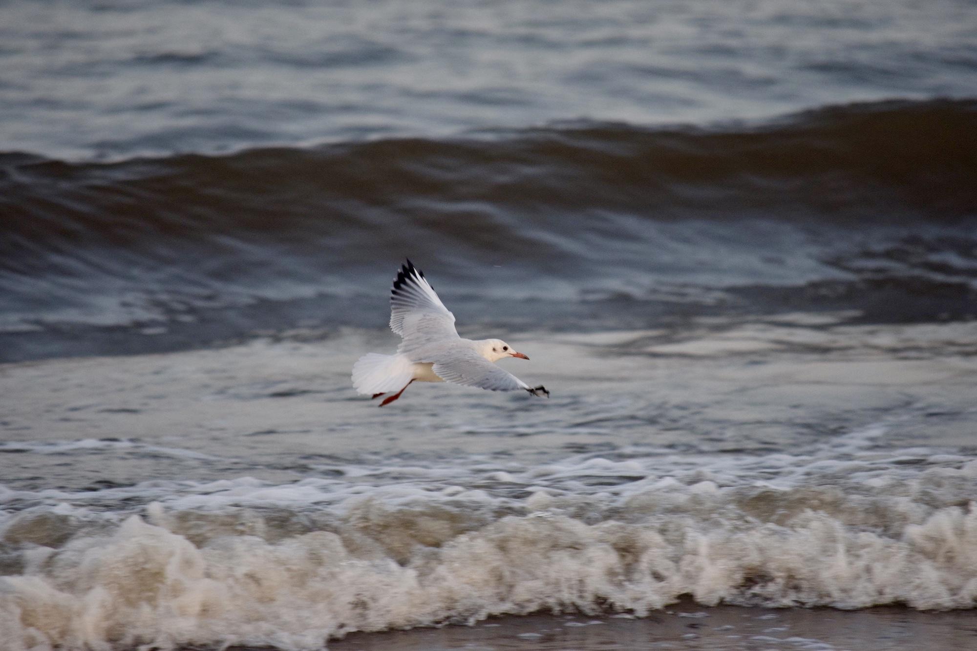 Mare - Pescurs in zbor